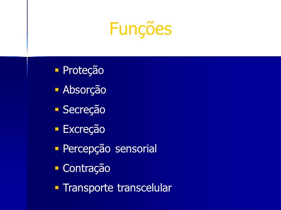 Funções Proteção Absorção Secreção Excreção Percepção sensorial Contração Transporte transcelular