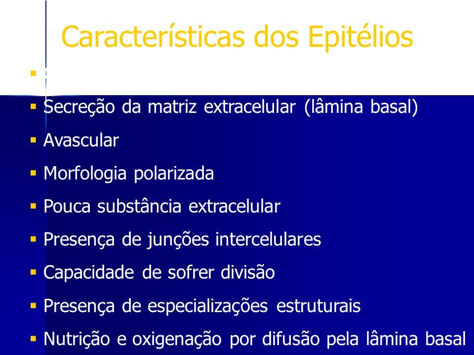 Características dos Epitélios Células agrupadas densamente Secreção da matriz extracelular (lâmina basal) Avascular Morfologia polarizada Pouca substâ