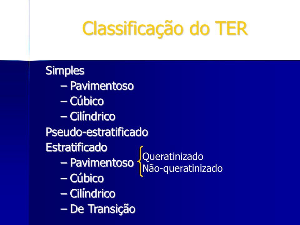 Classificação do TER Simples –Pavimentoso –Cúbico –Cilíndrico Pseudo-estratificadoEstratificado –Pavimentoso –Cúbico –Cilíndrico –De Transição Querati