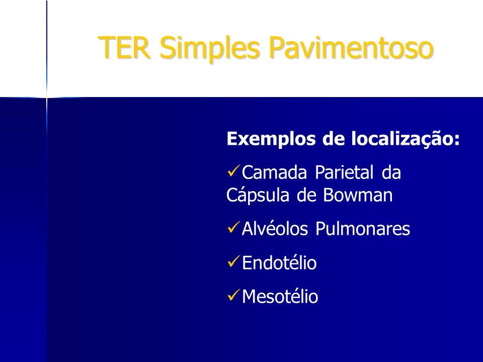 TER Simples Pavimentoso Exemplos de localização: Camada Parietal da Cápsula de Bowman Alvéolos Pulmonares Endotélio Mesotélio