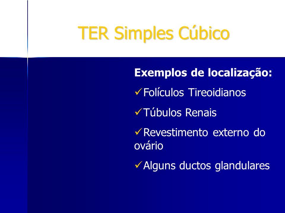 TER Simples Cúbico Exemplos de localização: Folículos Tireoidianos Túbulos Renais Revestimento externo do ovário Alguns ductos glandulares