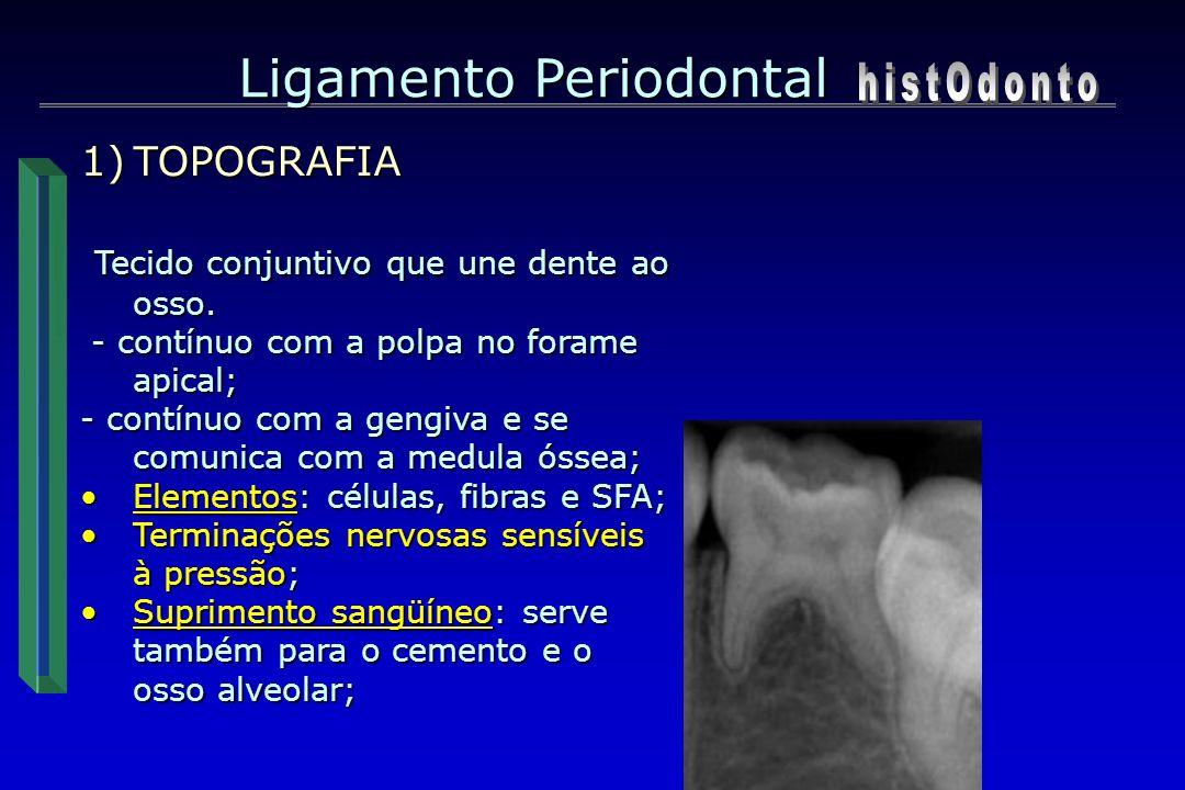 Ligamento Periodontal 1)TOPOGRAFIA Tecido conjuntivo que une dente ao osso. Tecido conjuntivo que une dente ao osso. - contínuo com a polpa no forame