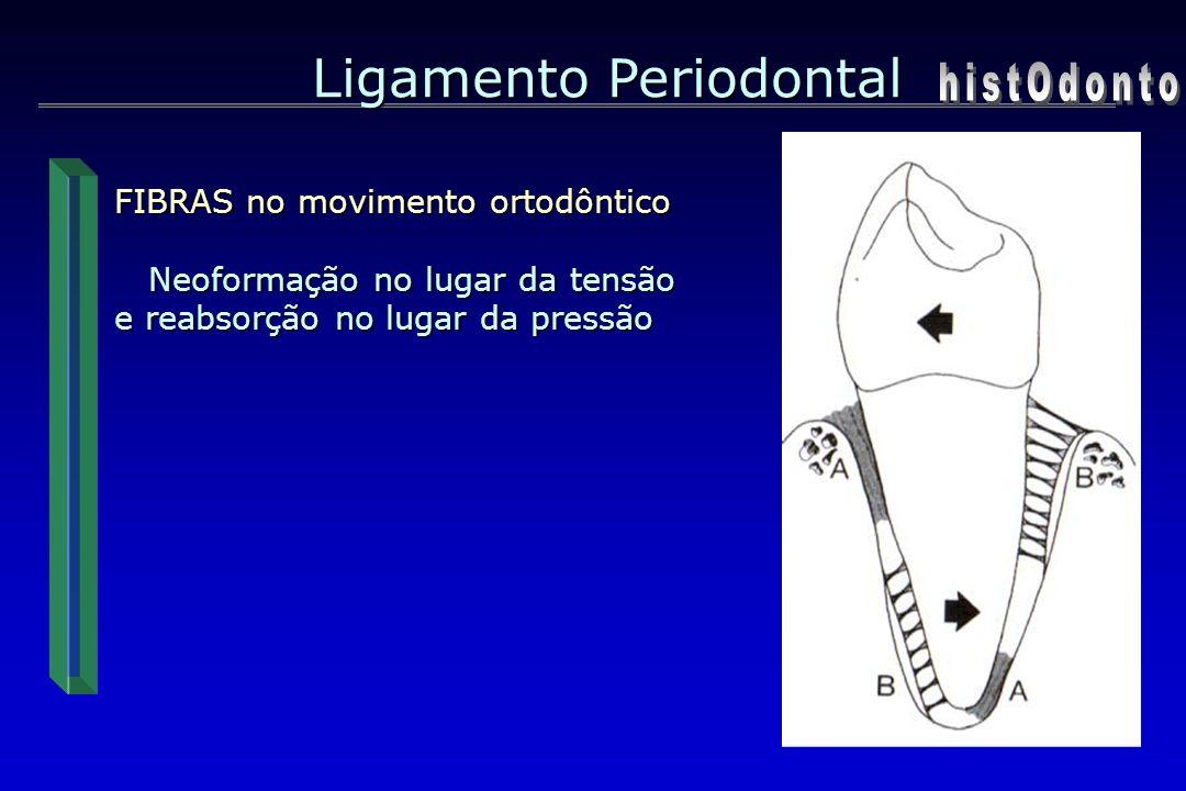 Ligamento Periodontal FIBRAS no movimento ortodôntico Neoformação no lugar da tensão Neoformação no lugar da tensão e reabsorção no lugar da pressão
