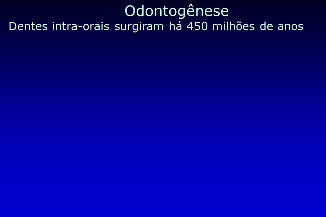 Odontogênese Dentes intra-orais surgiram há 450 milhões de anos