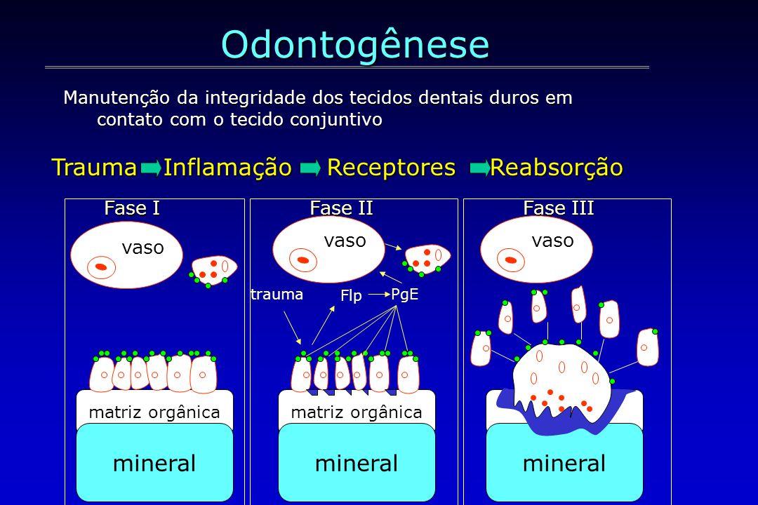 matriz orgânica mineral vaso matriz orgânica mineral vaso trauma Flp PgE mineral vaso Fase I Fase II Fase III Manutenção da integridade dos tecidos de