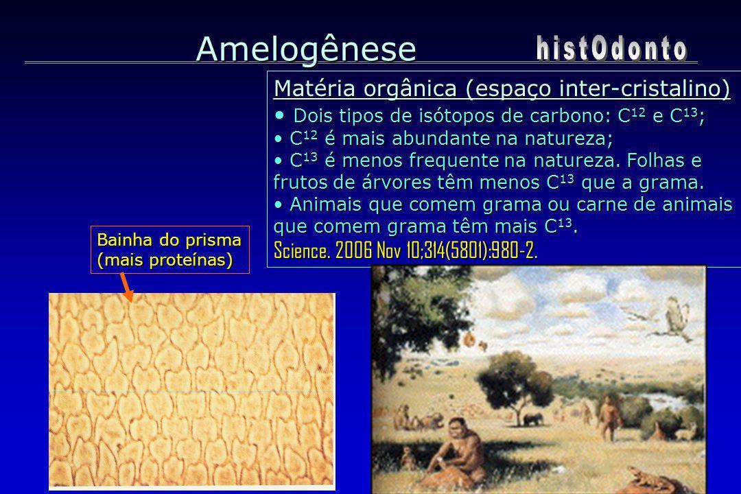 Bainha do prisma (mais proteínas) Amelogênese Matéria orgânica (espaço inter-cristalino) Dois tipos de isótopos de carbono: C 12 e C 13 ; Dois tipos d