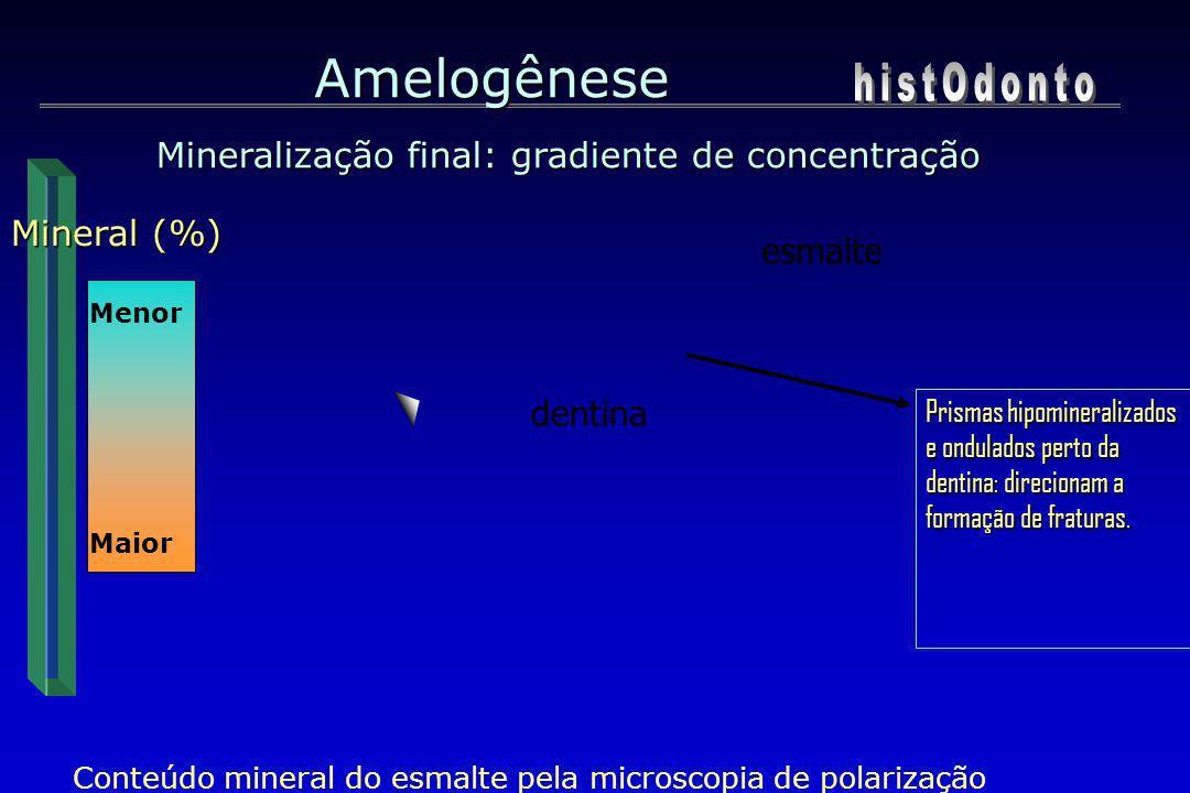 Amelogênese Mineralização final: gradiente de concentração Maior Mineral (%) Menor Maior Conteúdo mineral do esmalte pela microscopia de polarização e