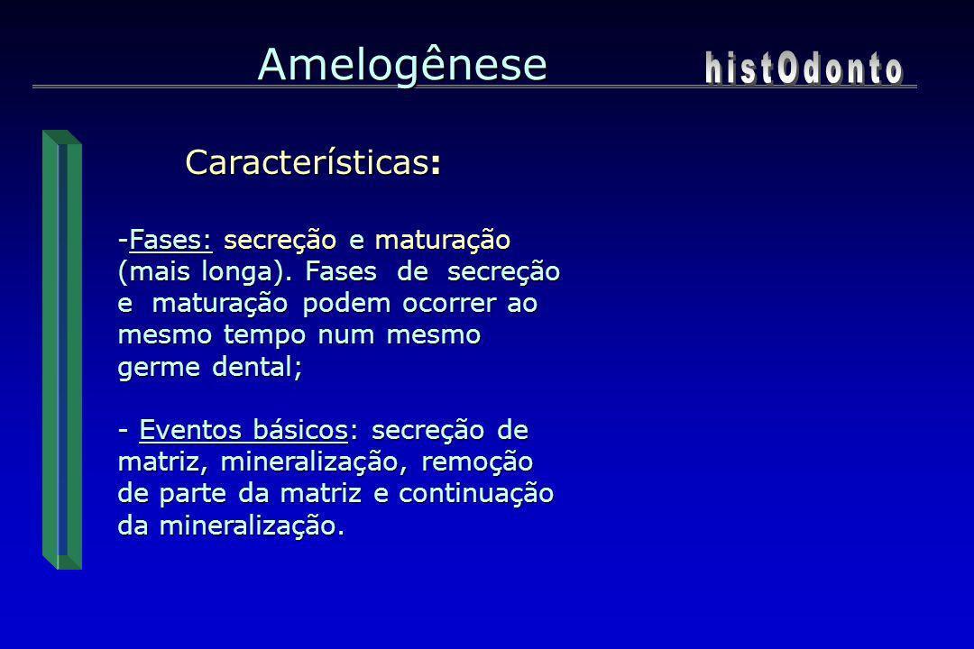 Amelogênese Características: Características: -Fases: secreção e maturação (mais longa). Fases de secreção e maturação podem ocorrer ao mesmo tempo nu
