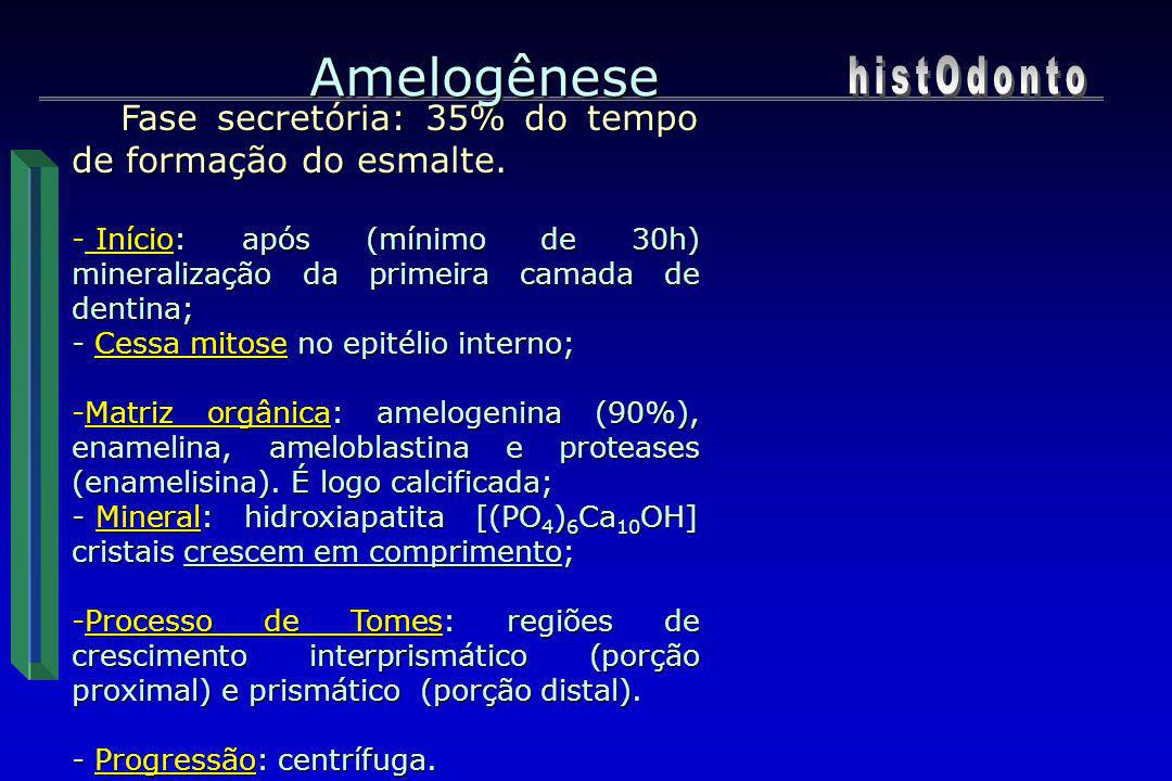 Oclusal Lateral Amelogênese Atividade dos ameloblastos Fatores Informa -doença febril; -má nutrição; - menarca; - nascimento; - lactação; - desmame; - diarréias.