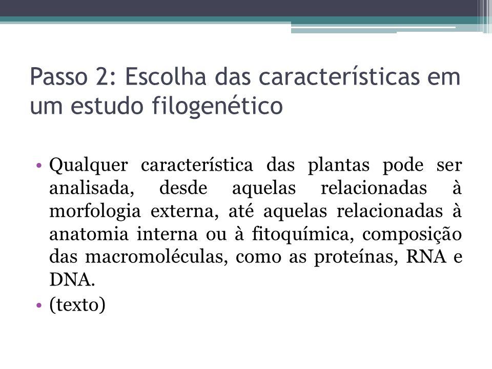 Passo 2: Escolha das características em um estudo filogenético Qualquer característica das plantas pode ser analisada, desde aquelas relacionadas à mo