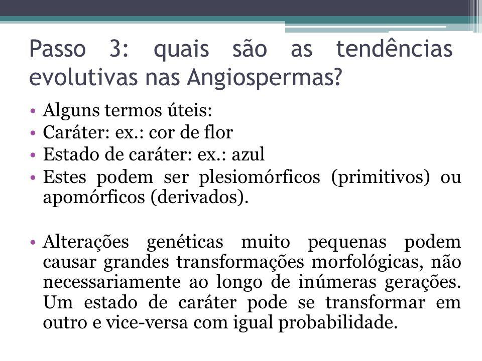 Passo 3: quais são as tendências evolutivas nas Angiospermas? Alguns termos úteis: Caráter: ex.: cor de flor Estado de caráter: ex.: azul Estes podem