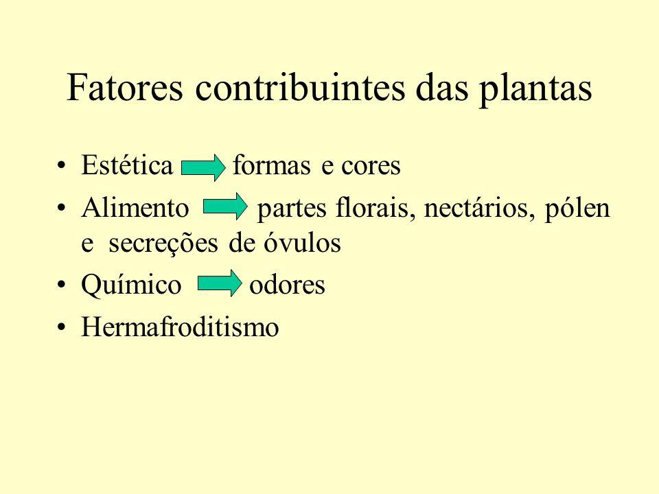 Fatores contribuintes das plantas Estética formas e cores Alimento partes florais, nectários, pólen e secreções de óvulos Químico odores Hermafroditis