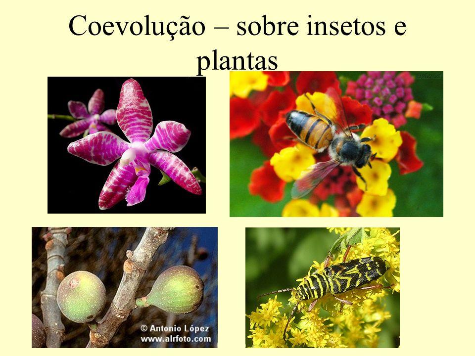 Caso antigo As interações contemporâneas entre as plantas com flores (Angiospermae) e seus polinizadores são interpretadas como sendo resultado de uma longa e íntima relação coevolucionária, estas relações tem aproximadamente 100 milhões de anos.