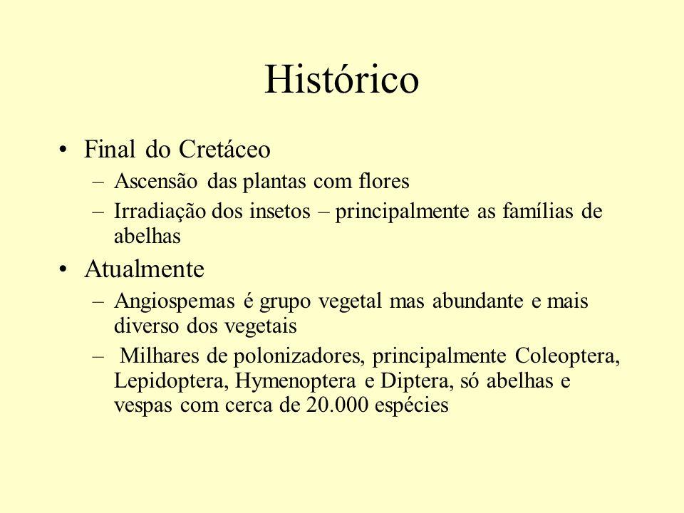 Histórico Final do Cretáceo –Ascensão das plantas com flores –Irradiação dos insetos – principalmente as famílias de abelhas Atualmente –Angiospemas é