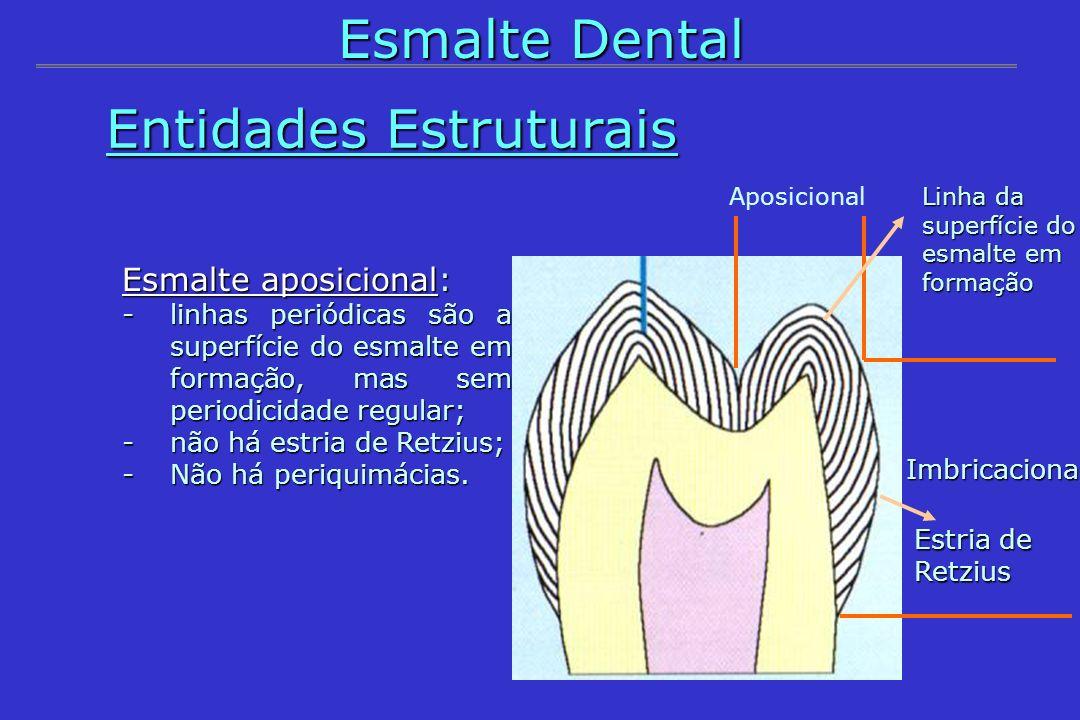 Aposicional Imbricacional Entidades Estruturais Entidades Estruturais Esmalte Dental Estria de Retzius Linha da superfície do esmalte em formação Esma