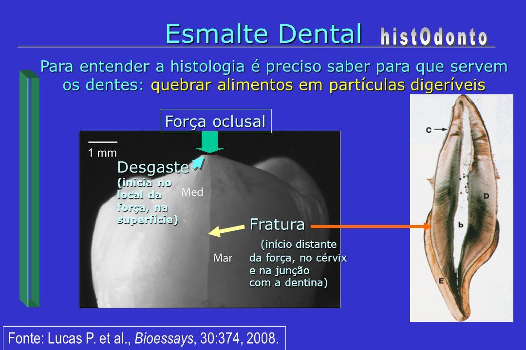 Esmalte Dental Para entender a histologia é preciso saber para que servem os dentes: quebrar alimentos em partículas digeríveis Força oclusal Fratura
