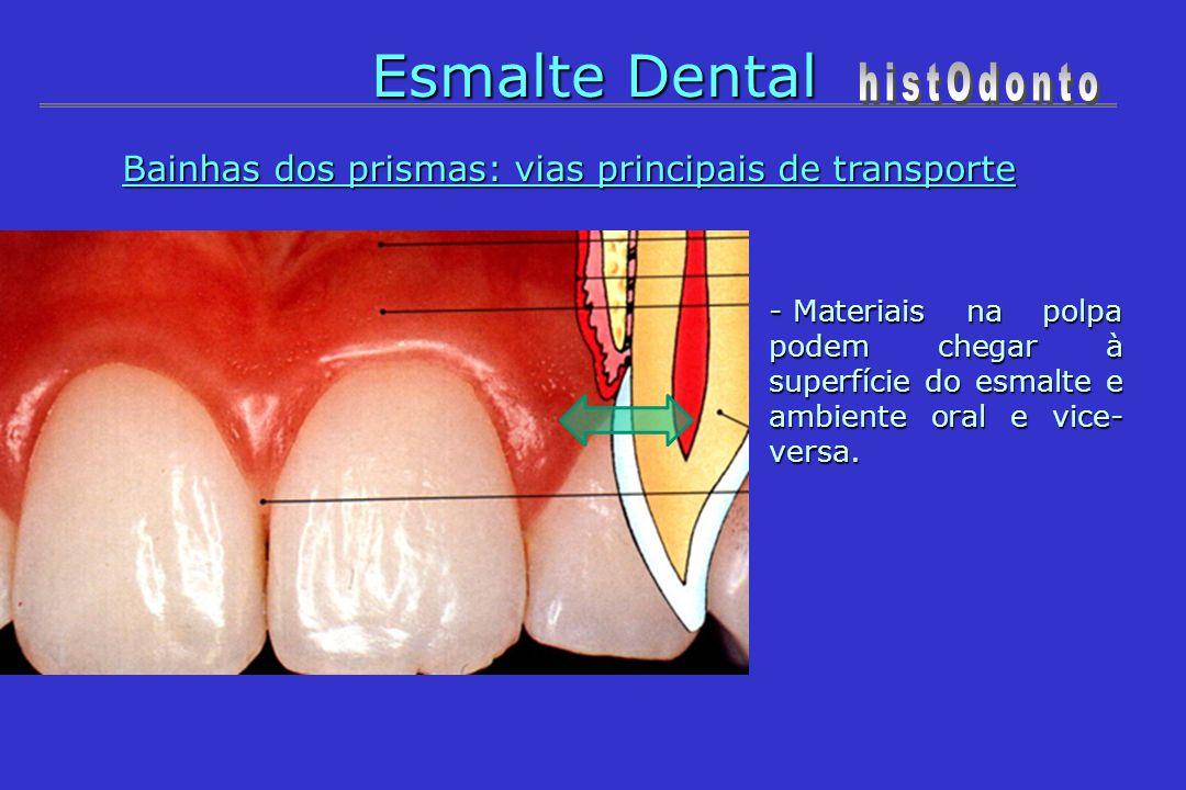 Esmalte Dental Bainhas dos prismas: vias principais de transporte - Materiais na polpa podem chegar à superfície do esmalte e ambiente oral e vice- ve