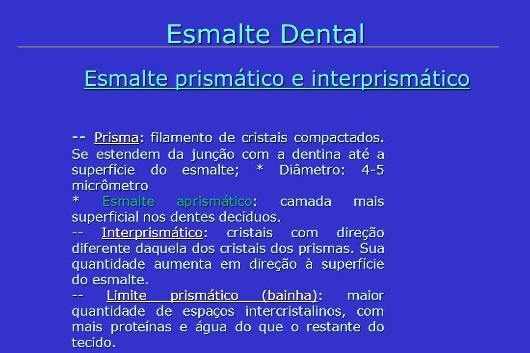 -- Prisma: filamento de cristais compactados. Se estendem da junção com a dentina até a superfície do esmalte; * Diâmetro: 4-5 micrômetro * Esmalte ap