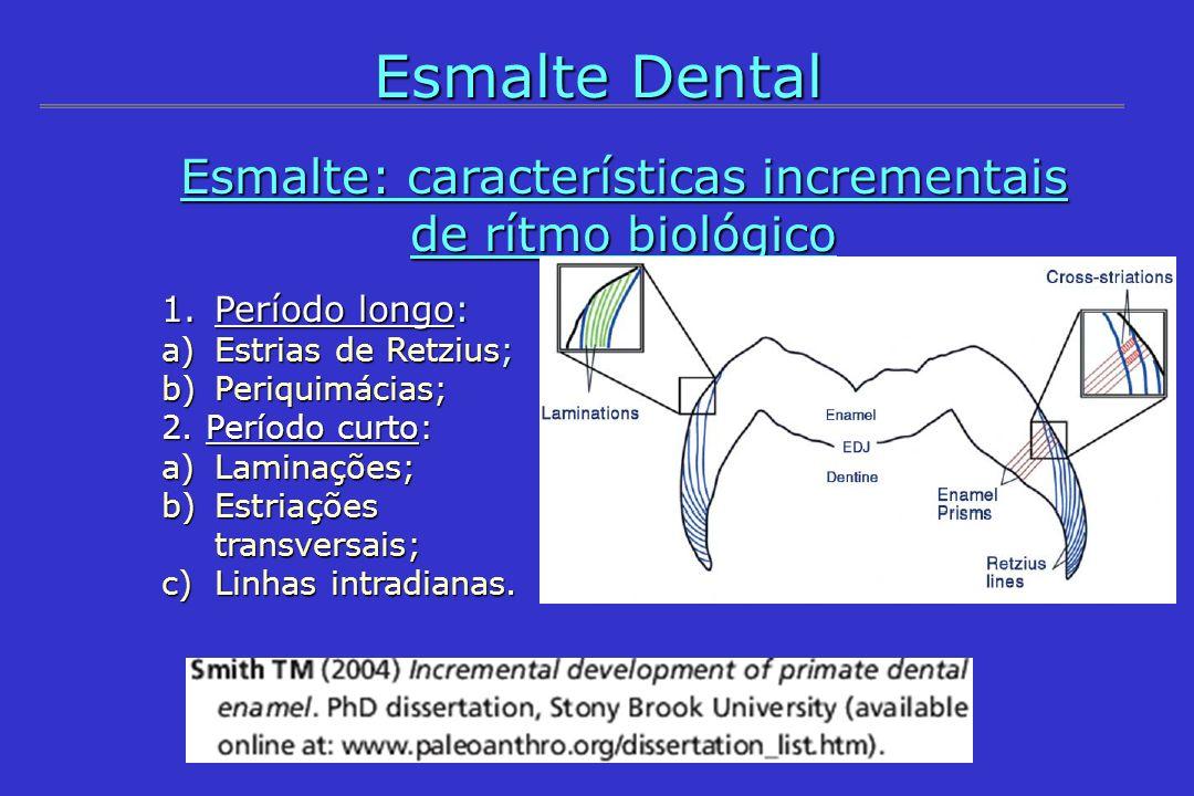Entidades Estruturais 1.a) Estrias de Retzius: 1.a) Estrias de Retzius: - Definição: registros das posições sucessivas da superfície do esmalte em formação, que atingem a superfície e formam periquimácias; - Origem (parcial): ritmo biológico livre, que é próprio para cada indivíduo; - Distanciamento: periodicidade regular (n° de estriações transversais) em cada indivíduo (ritmo biológico corporal); - Morfologia: linhas que cortam os prismas obliquamente, com intervalos de separação de 6-12 dias em humanos; - Morfologia: linhas que cortam os prismas obliquamente, com intervalos de separação de 6-12 dias em humanos; Esmalte Dental