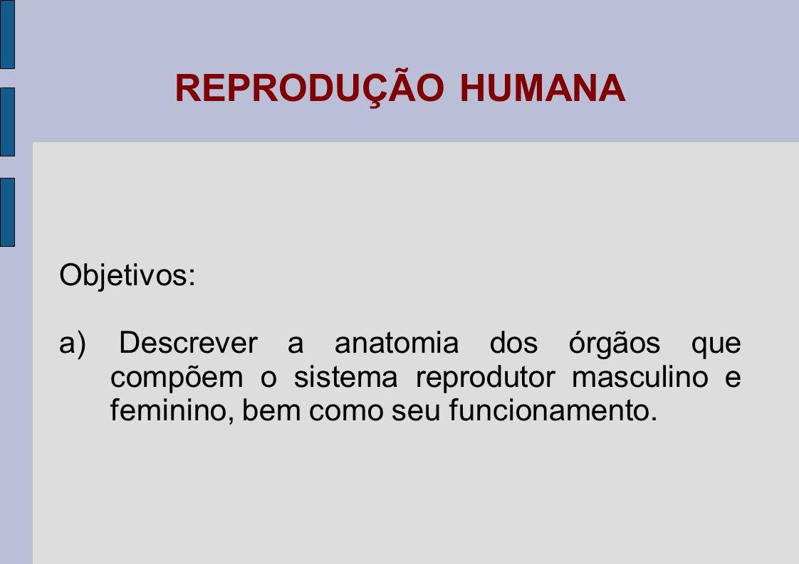 REPRODUÇÃO HUMANA Objetivos: a) Descrever a anatomia dos órgãos que compõem o sistema reprodutor masculino e feminino, bem como seu funcionamento.