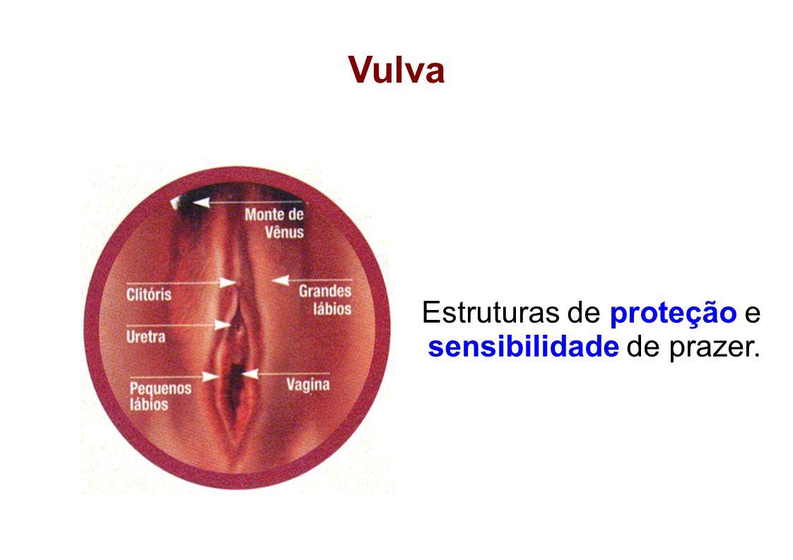 Vulva Estruturas de proteção e sensibilidade de prazer.