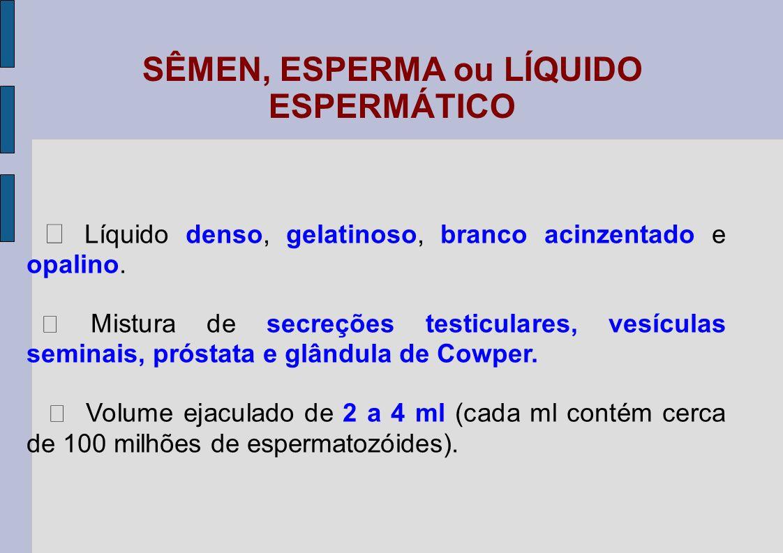 SÊMEN, ESPERMA ou LÍQUIDO ESPERMÁTICO Líquido denso, gelatinoso, branco acinzentado e opalino. Mistura de secreções testiculares, vesículas seminais,