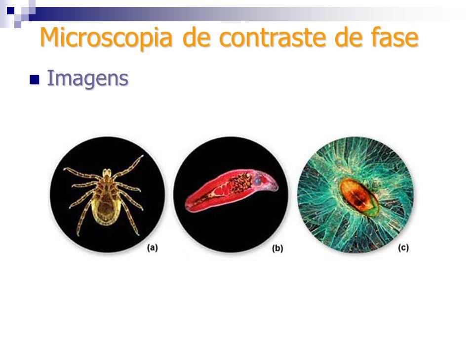 Microscopia de contraste de fase Imagens Imagens