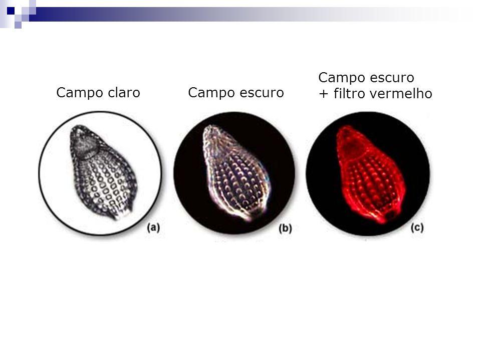 Microscopia de campo escuro Campo escuro: bloqueio dos raios centrais, permitindo apenas iluminação oblíqua na amostra.