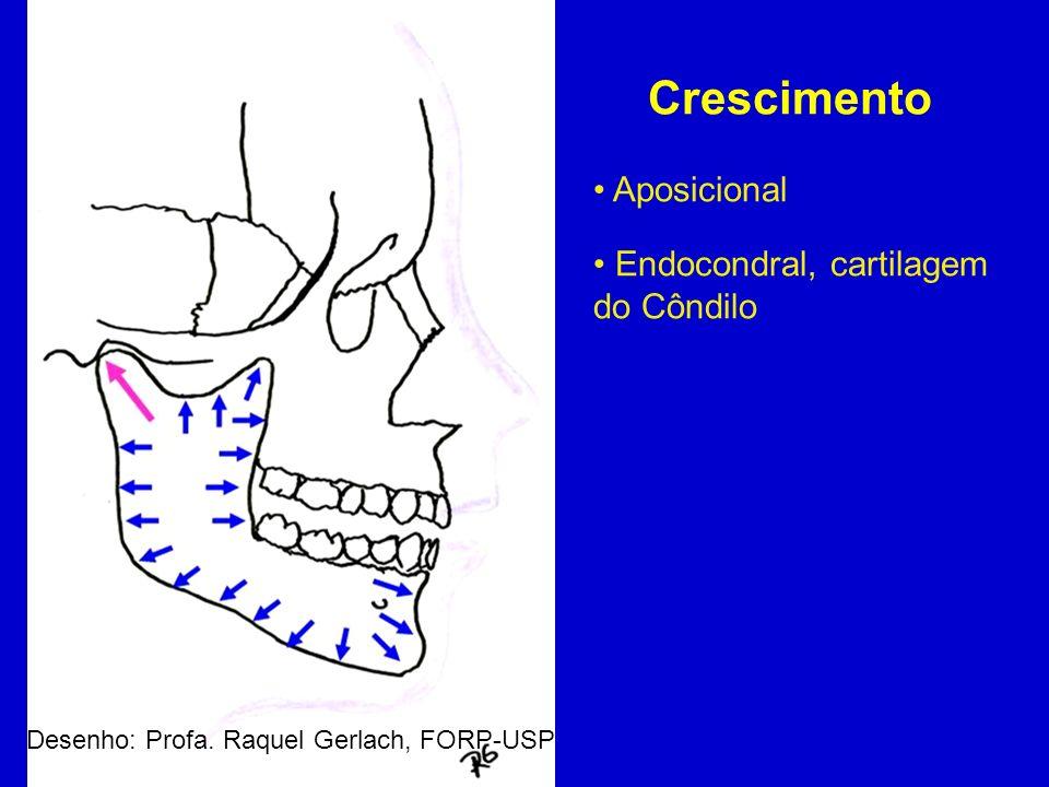 Crescimento Aposicional Endocondral, cartilagem do Côndilo Desenho: Profa. Raquel Gerlach, FORP-USP