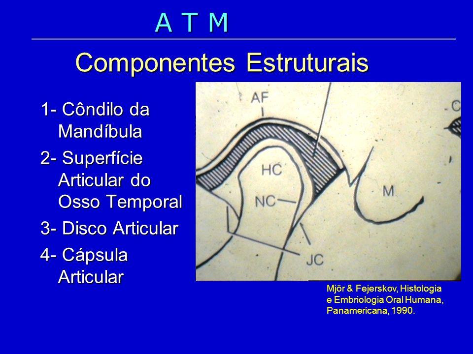 Componentes Estruturais 1- Côndilo da Mandíbula 2- Superfície Articular do Osso Temporal 3- Disco Articular 4- Cápsula Articular Mjör & Fejerskov, His