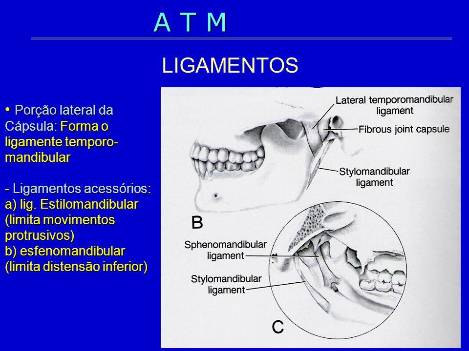 Porção lateral da Cápsula: Forma o ligamente temporo- mandibular - Ligamentos acessórios: a) lig. Estilomandibular (limita movimentos protrusivos) b)