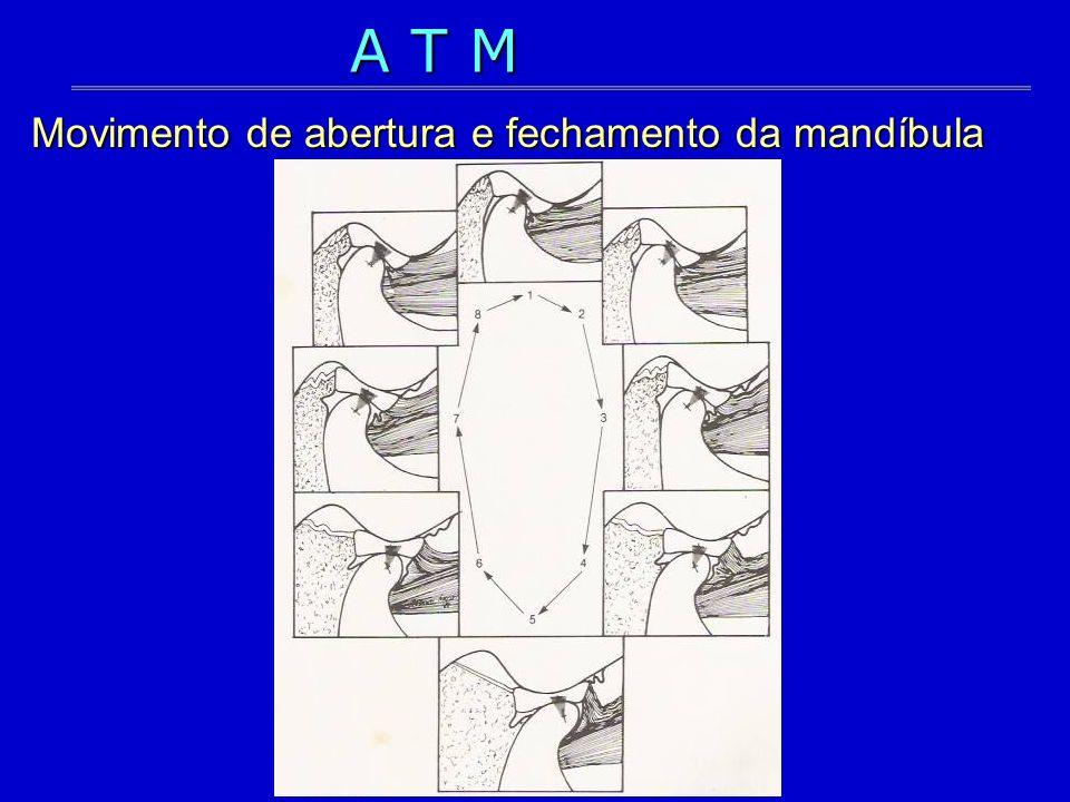 A T M Movimento de abertura e fechamento da mandíbula