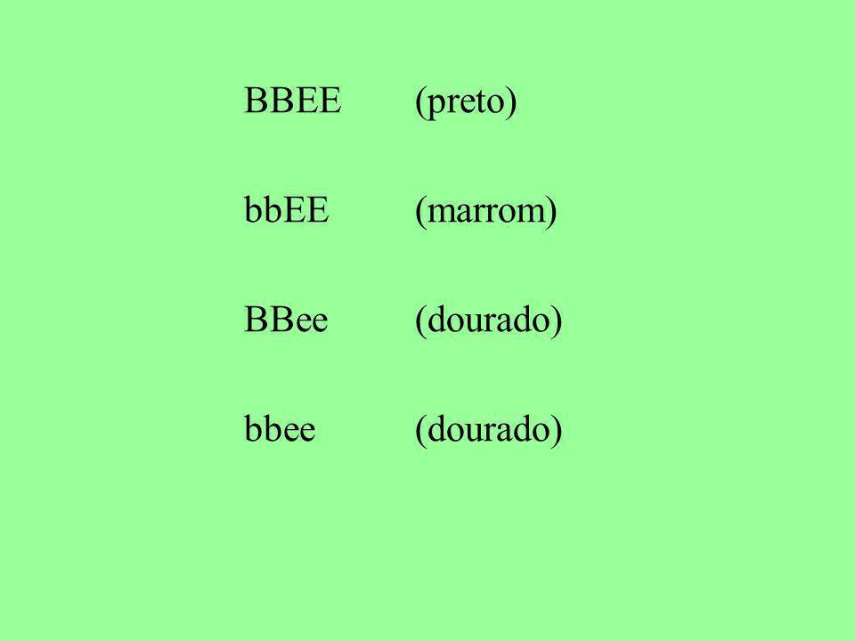 BBEE(preto) bbEE(marrom) BBee(dourado) bbee(dourado)
