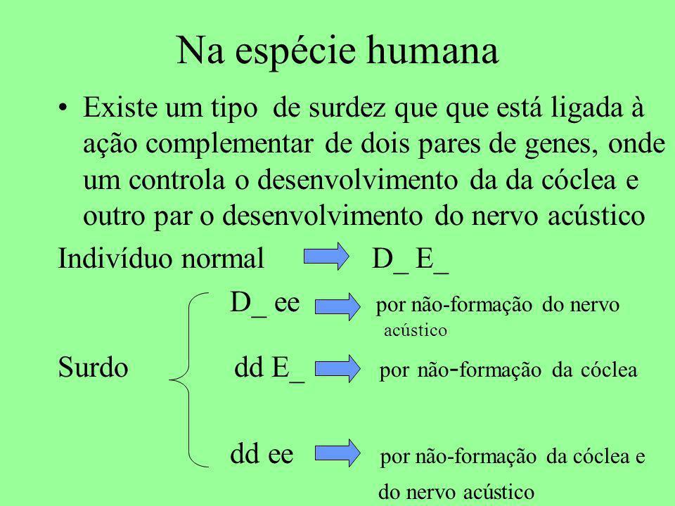 Na espécie humana Existe um tipo de surdez que que está ligada à ação complementar de dois pares de genes, onde um controla o desenvolvimento da da có