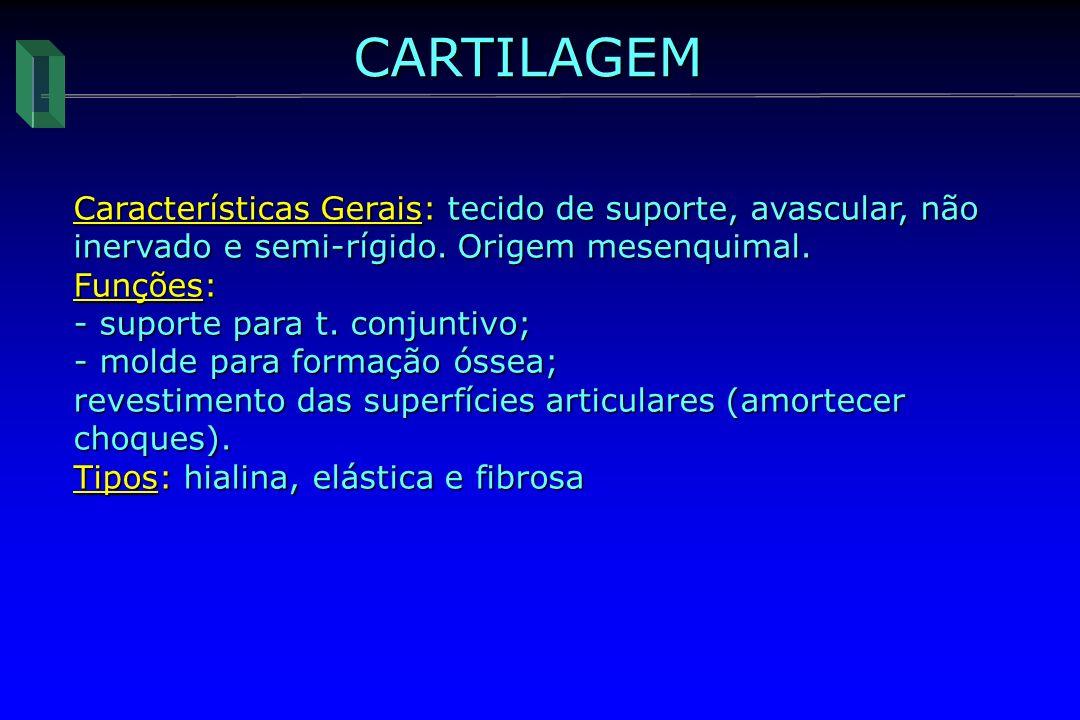 CARTILAGEM Características Gerais: tecido de suporte, avascular, não inervado e semi-rígido. Origem mesenquimal. Funções: - suporte para t. conjuntivo