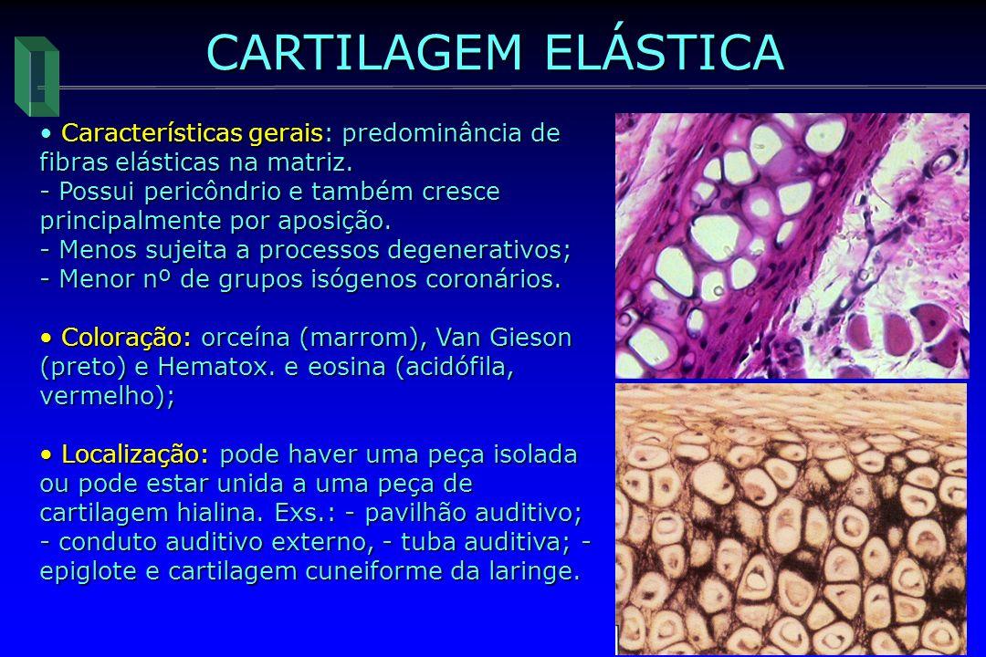 CARTILAGEM ELÁSTICA Características gerais: predominância de fibras elásticas na matriz. Características gerais: predominância de fibras elásticas na