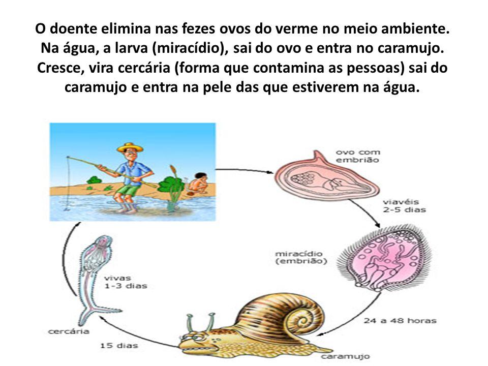 O doente elimina nas fezes ovos do verme no meio ambiente. Na água, a larva (miracídio), sai do ovo e entra no caramujo. Cresce, vira cercária (forma
