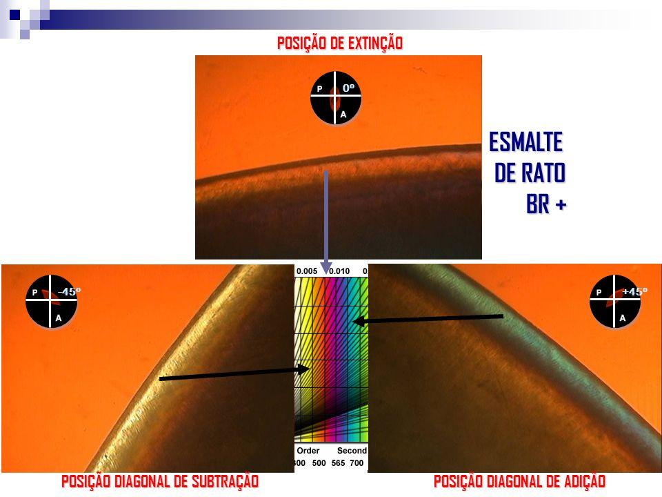 -45 o +45 o 0o0o POSIÇÃO DE EXTINÇÃO POSIÇÃO DIAGONAL DE ADIÇÃO POSIÇÃO DIAGONAL DE SUBTRAÇÃO ESMALTE DE RATO DE RATO BR + BR +