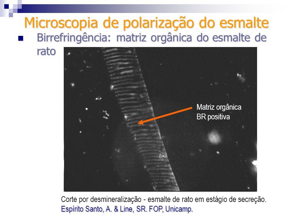 Microscopia de polarização do esmalte Birrefringência: matriz orgânica do esmalte de rato Birrefringência: matriz orgânica do esmalte de rato Matriz o