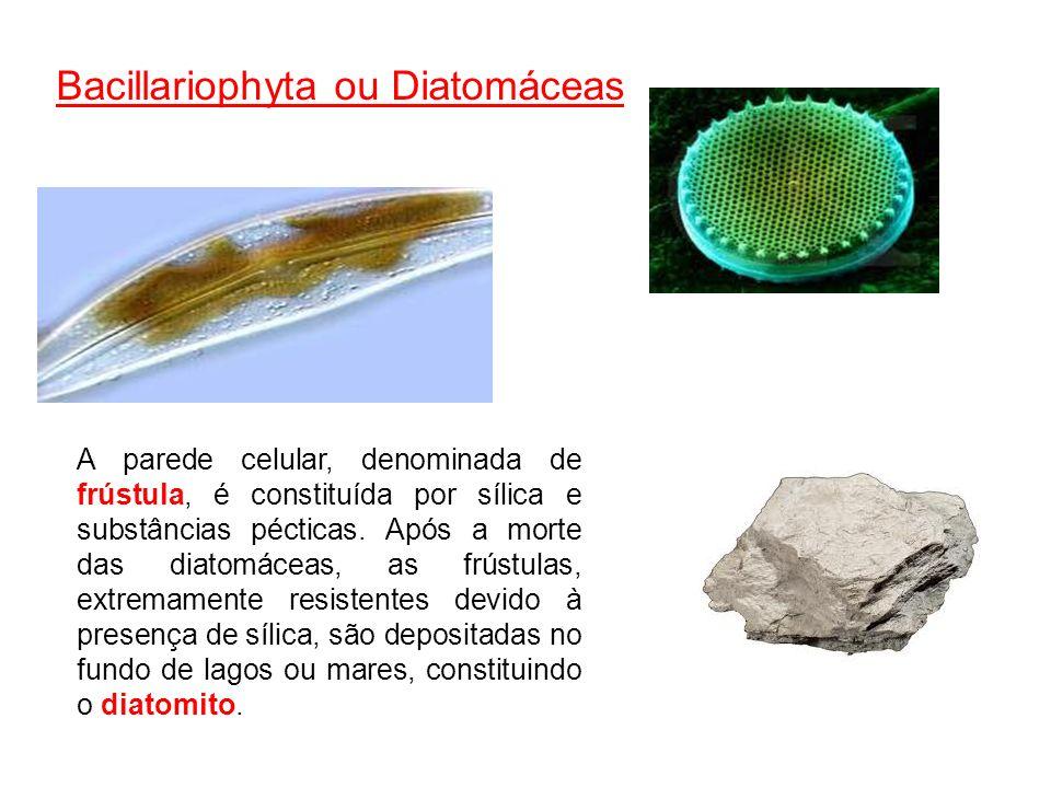 A parede celular, denominada de frústula, é constituída por sílica e substâncias pécticas. Após a morte das diatomáceas, as frústulas, extremamente re