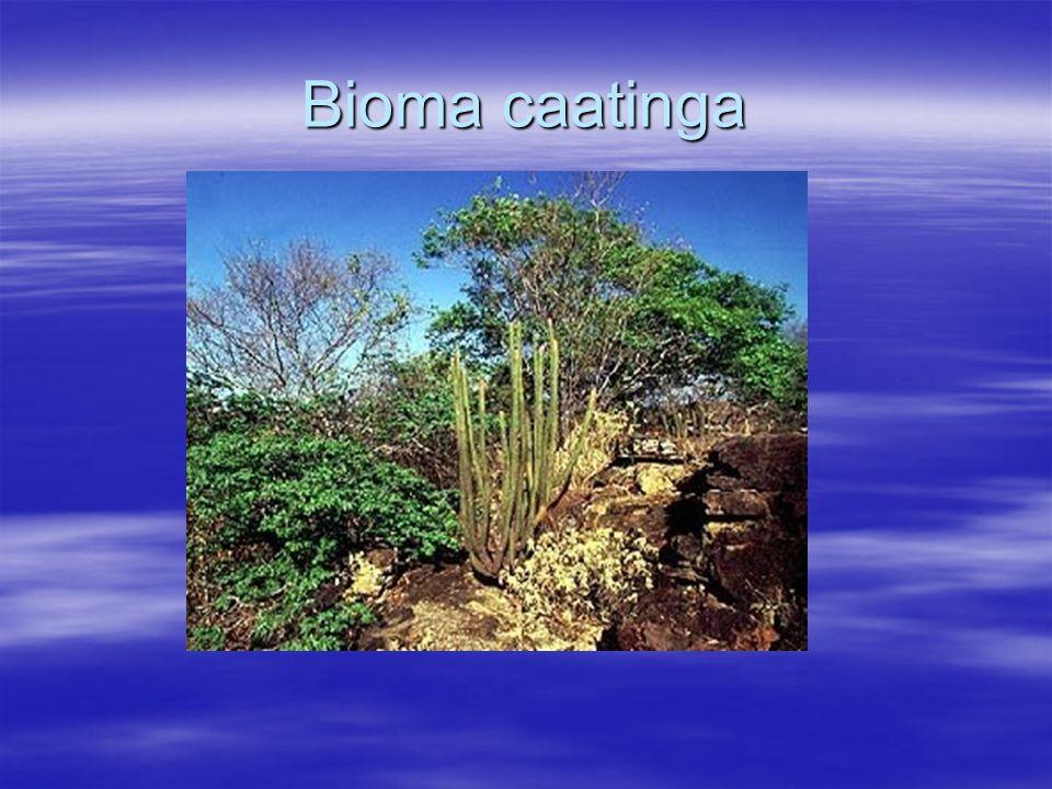 Bioma da patagônia