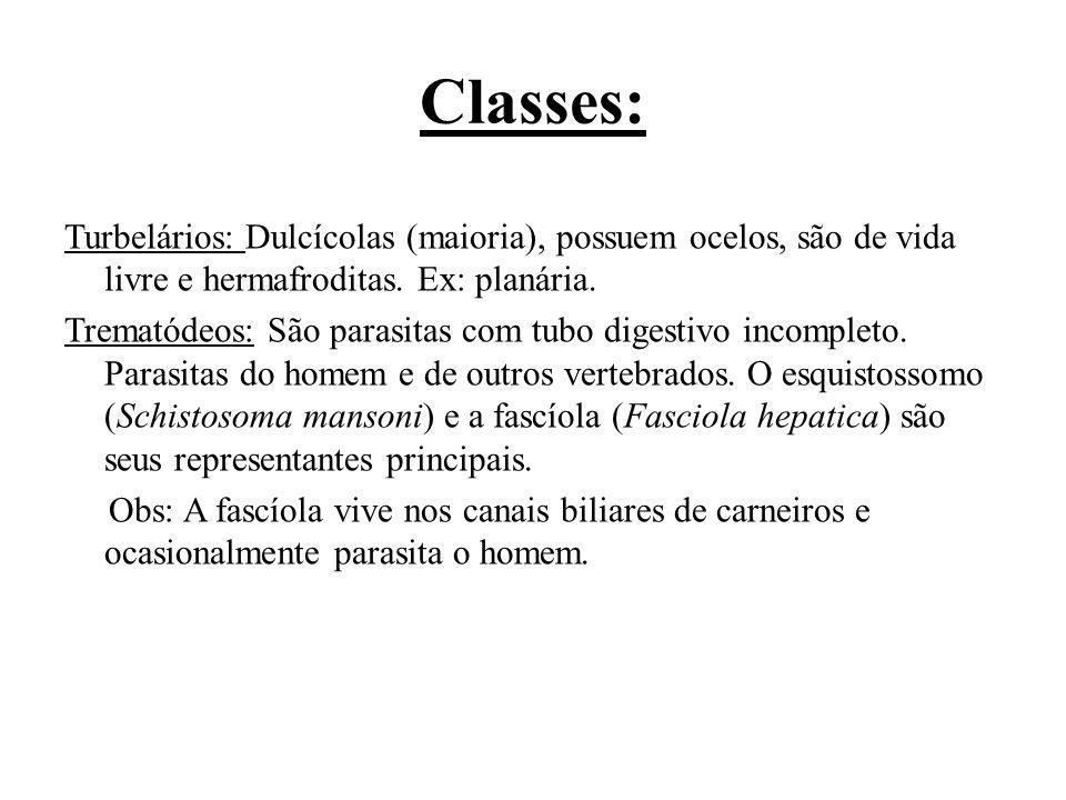 Classes: Turbelários: Dulcícolas (maioria), possuem ocelos, são de vida livre e hermafroditas. Ex: planária. Trematódeos: São parasitas com tubo diges