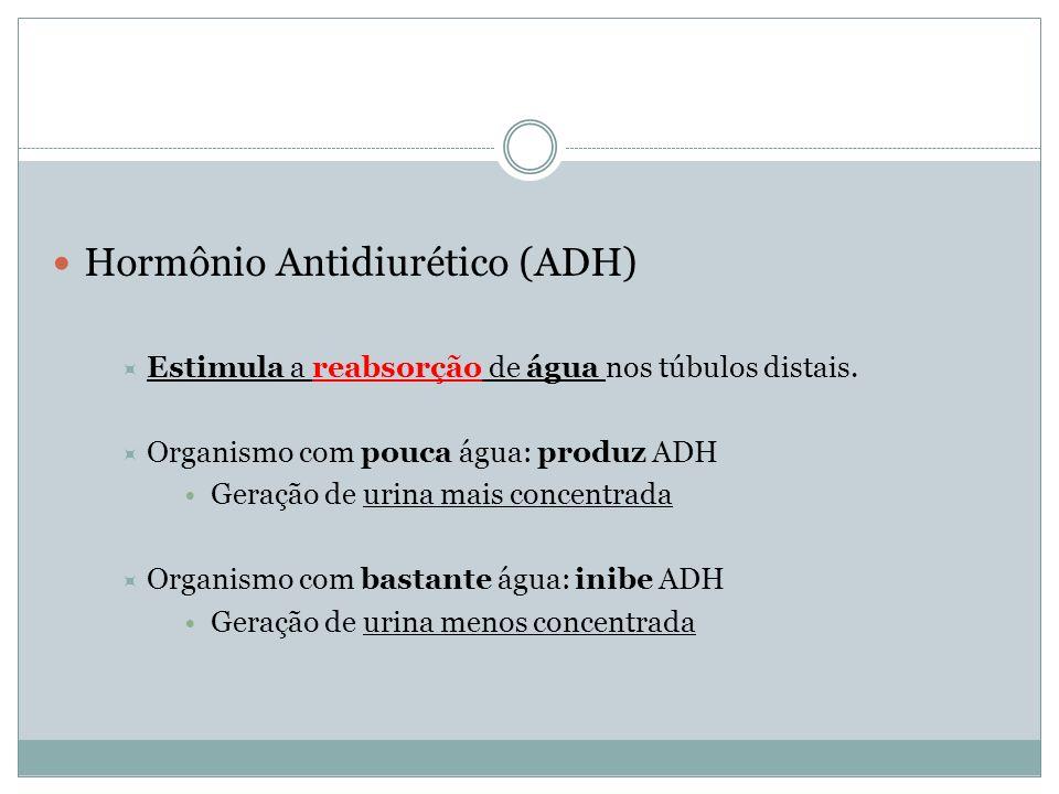 Hormônio Antidiurético (ADH) Estimula a reabsorção de água nos túbulos distais. Organismo com pouca água: produz ADH Geração de urina mais concentrada