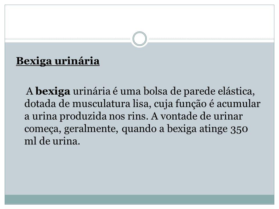 Bexiga urinária A bexiga urinária é uma bolsa de parede elástica, dotada de musculatura lisa, cuja função é acumular a urina produzida nos rins. A von