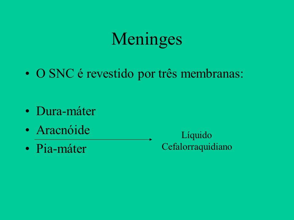 Meninges O SNC é revestido por três membranas: Dura-máter Aracnóide Pia-máter Líquido Cefalorraquidiano