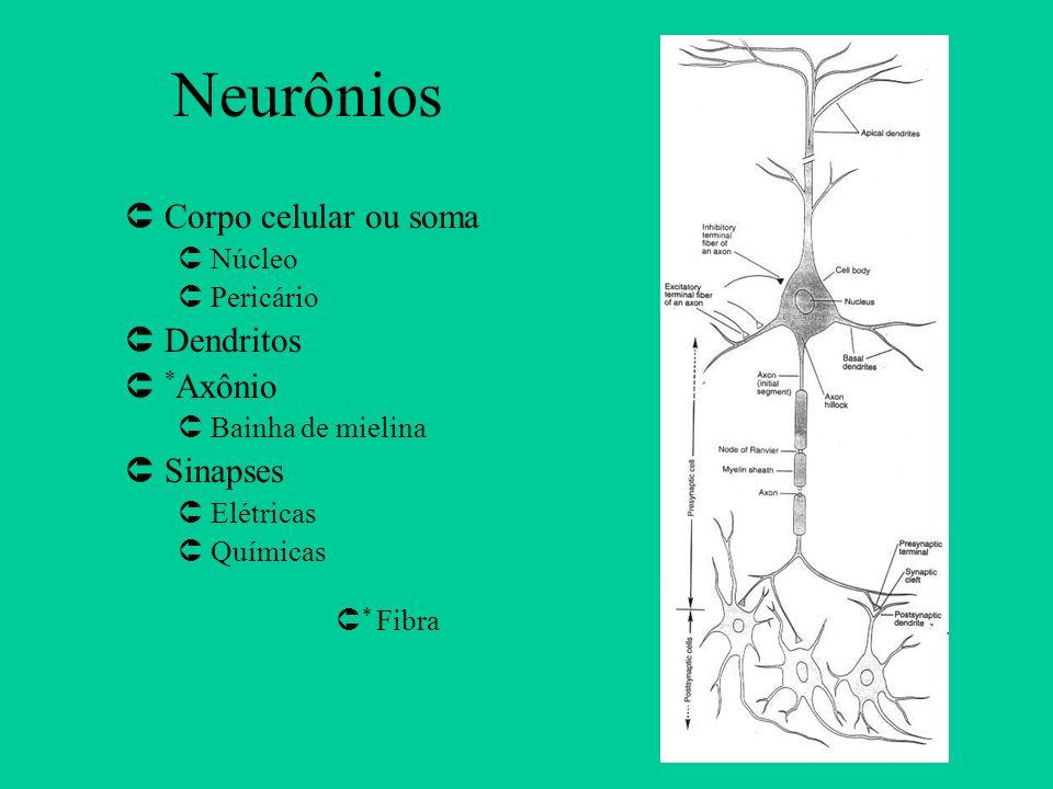Neurônios ÛCorpo celular ou soma ÛNúcleo ÛPericário ÛDendritos Û * Axônio ÛBainha de mielina ÛSinapses ÛElétricas ÛQuímicas Û * Fibra