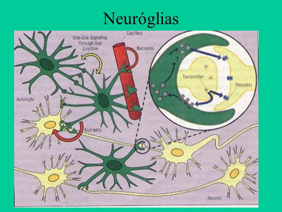 Neuróglias