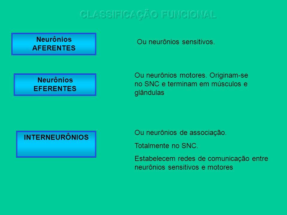 Neurônios AFERENTES Neurônios EFERENTES INTERNEURÔNIOS Ou neurônios sensitivos. Ou neurônios motores. Originam-se no SNC e terminam em músculos e glân