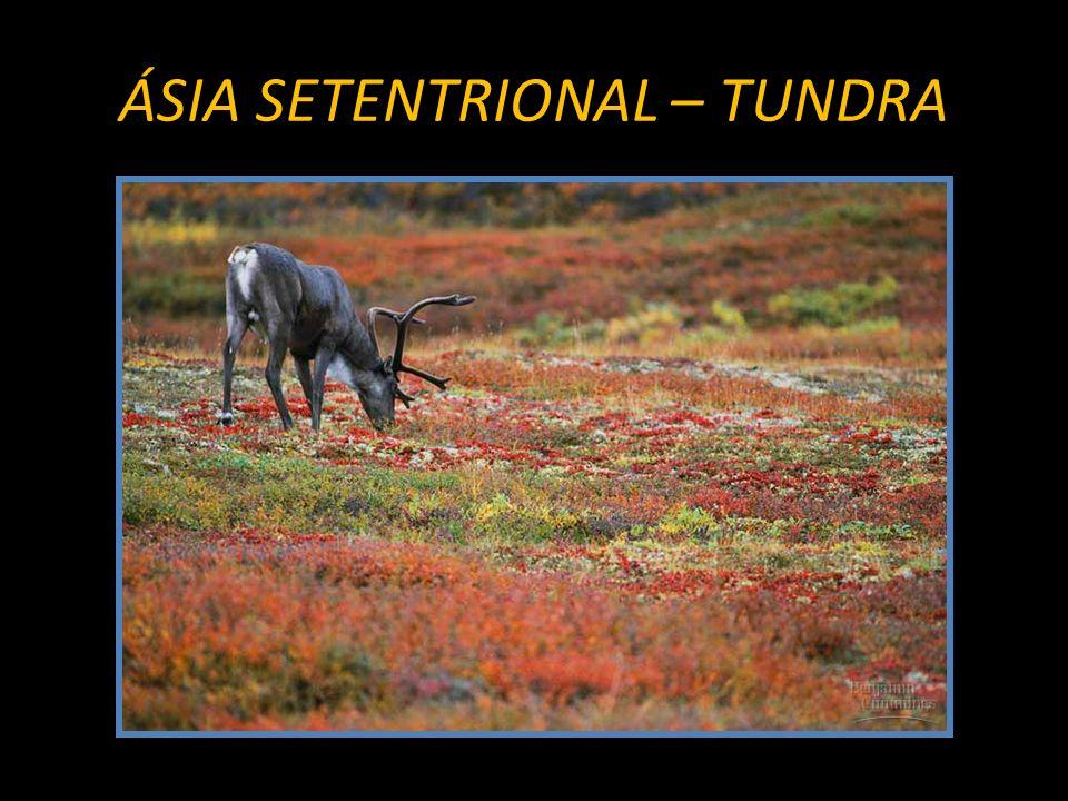 ÁSIA SETENTRIONAL – TUNDRA