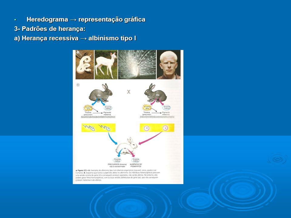 Heredograma representação gráfica Heredograma representação gráfica 3- Padrões de herança: a) Herança recessiva albinismo tipo I